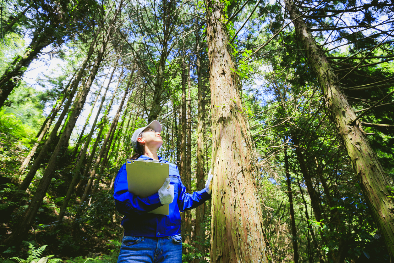 Asian women working with forestry