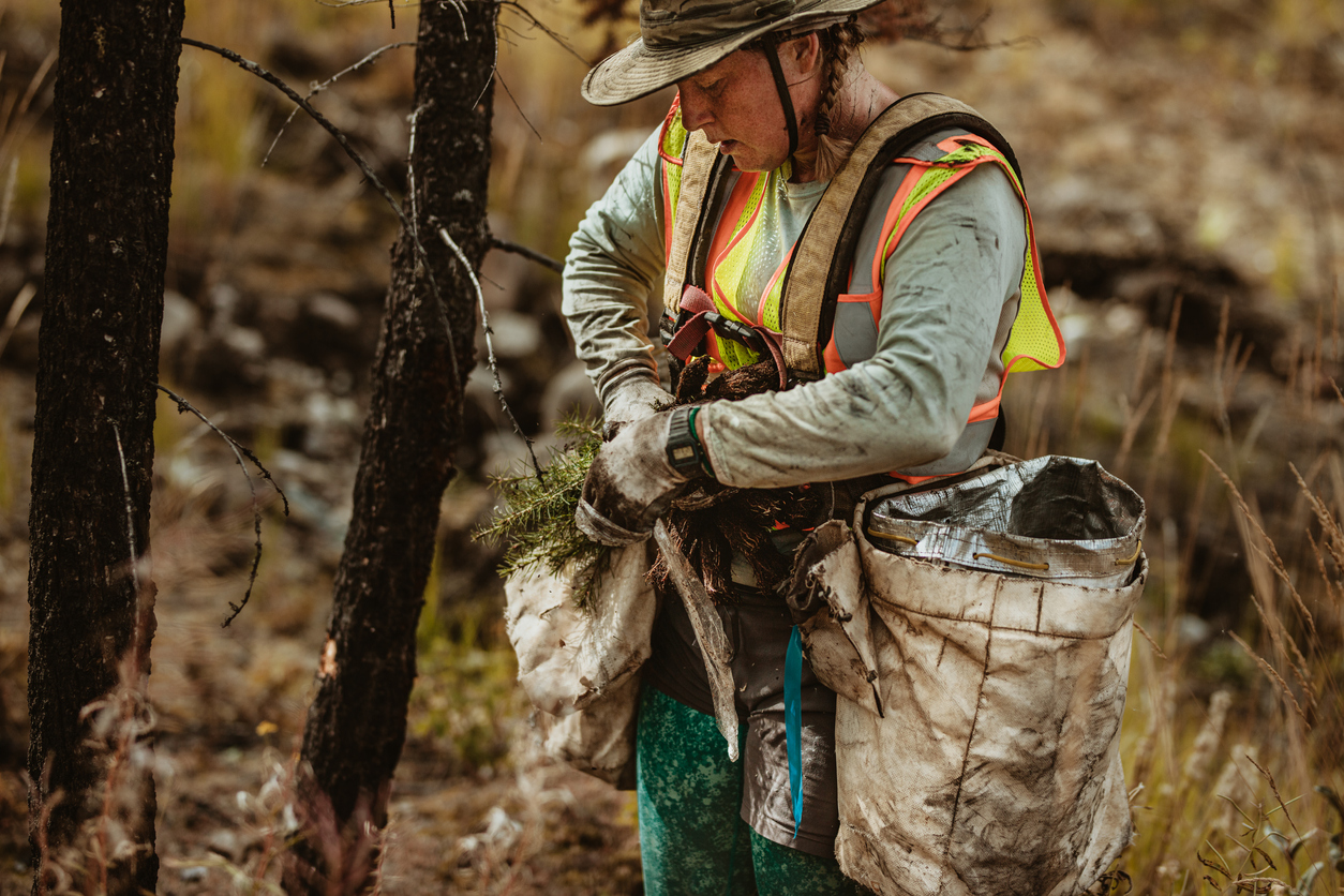 Woman working in forest planting new trees. Female forester wearing reflective vest taking out sapling from the bag.