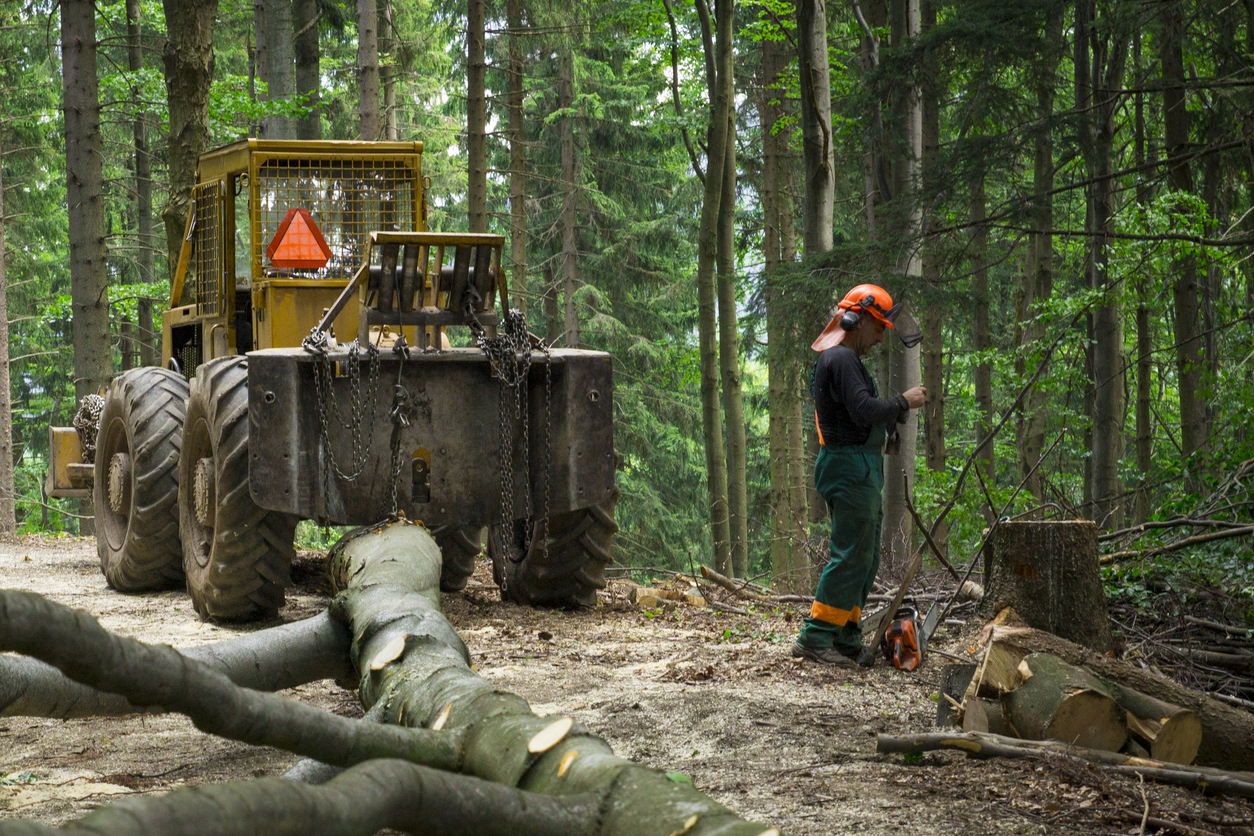 Sudety Mountain, Poland -July 23, 2014 Forestry worker and  machinery during hard work in Polish mountain.
